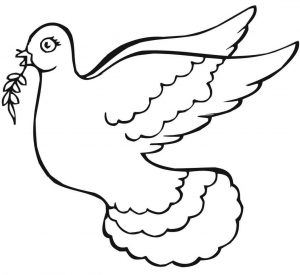 Drawing dove